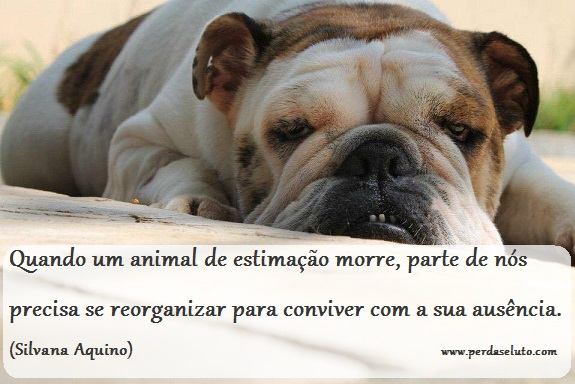 Animal de Estimacao